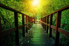 Outdoor hiking nature trail. In deep green forest Stock Photo