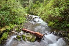 Outdoor Hiking Trail, Oregon Stock Images