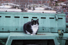Outdoor kitchen. Cart with field kitchen for the soldiers. Cat waiting for food Stock Images
