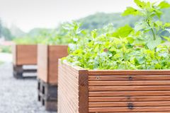 Outdoor woooden pots with green plants, out of focus background. Outdoor large brown woooden pots with green plants, out of focus background royalty free stock images