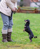 Outdoor lessons with dog Stock Image