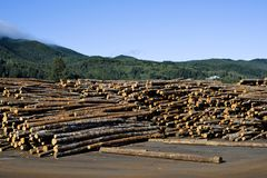 Outdoor log storage at sawmill Stock Photography