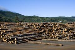 Outdoor log storage at sawmill. Sawmill in Garibaldi, Oregon, outdor logs storage Stock Photography