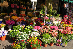 Outdoor market. Rome, Italy - 29 March, 2012: Variety of flowers for sale at outdoor market in central Rome royalty free stock photo