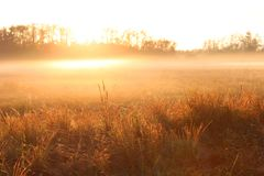 Nature Photography of an Early Sun Rise over a Farm Field with Heavy Fog Stock Images