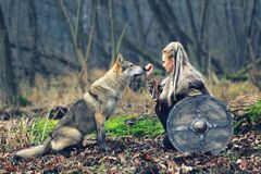 Outdoor northern warrior woman with braided hair and war makeup holding shield and ax with wolf next to her ready to attack - royalty free stock photo