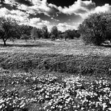 Outdoor park. Artistic look in black and white. Royalty Free Stock Photography