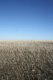 Outdoor photo of field that has been harvested with clear blue sky. Here is an outdoor photo of a field that has been harvested with clear blue sky. Farming Royalty Free Stock Photos