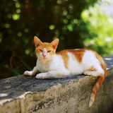 Outdoor photo of young cat Royalty Free Stock Photo