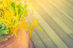 Outdoor plant in a traditional wooden floor . ( Filtered image p Royalty Free Stock Photo