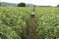 Outdoor Plantation with Crouching Man in the Middle stock photo