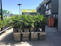 Outdoor plants and flowers on sale at a hardware store.  stock image