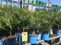 Outdoor plants and flowers on sale at a hardware store.  royalty free stock photo
