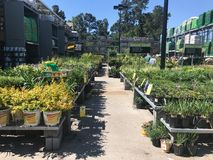 Outdoor plants and flowers on sale at a hardware store.  stock images