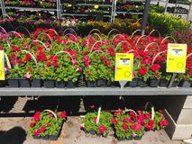 Outdoor plants and flowers on sale at a hardware store.  royalty free stock photography