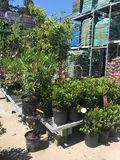 Outdoor plants and flowers on sale at a hardware store.  stock photography