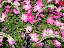 Outdoor plants and flowers on sale at a hardware store.  royalty free stock photos