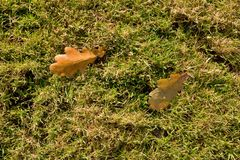 Outdoor playground, poor grass at end of footbal  season with first fall leaves Royalty Free Stock Images