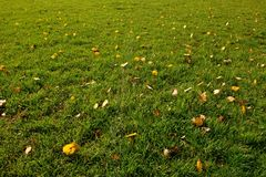 Outdoor playground, poor grass at end of   season with first colorful leaves Royalty Free Stock Images