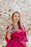 Outdoor portrait of beautiful blond woman. Wearing pink dress, posing in spring blooming flowers Royalty Free Stock Photo