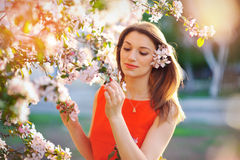 Outdoor portrait of a beautiful brunette woman in red dress. Among blossom apple trees Stock Images