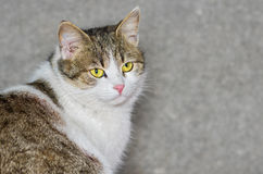 Outdoor portrait of beautiful ordinary cat Royalty Free Stock Photo