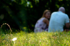Outdoor Portrait of a couple in summer. Couple sitting outdoors with back to camera. Relaxing on Green Grass.Park Stock Photos