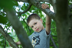 Outdoor portrait of cute boy. Portrait of cute boy on a tree Royalty Free Stock Photo