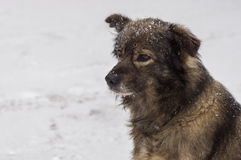 Outdoor portrait of cute mixed-breed dog at winter season Royalty Free Stock Photo