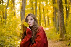 Outdoor portrait Gorgeous brunette model girl with sunny day light. Autumn tree. cute girl in good mood posing in autumn. Day. Freedom Concept stock images