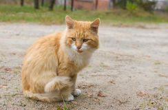 Outdoor portrait of guarded tabby cat Royalty Free Stock Photo