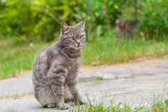Outdoor portrait of guarded tabby cat Stock Image
