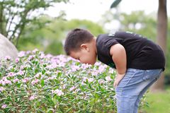 Little asian boy. Outdoor portrait of a little asian fat boy,Play in the park Smell flowers royalty free stock image