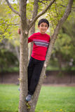 Outdoor Portrait of a little Boy on a Tree. In Spring Royalty Free Stock Images