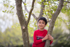 Outdoor Portrait of a little Boy on a Tree. In Spring Royalty Free Stock Image