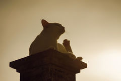 Outdoor portrait, silhouette of a thai cat has sitting on pillar with sunset light,filtered image,selective focus Royalty Free Stock Photography