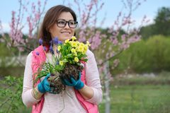 Outdoor portrait of smiling middle-aged woman in garden gloves with flowers for planting, spring flowering garden background, copy. Space royalty free stock image