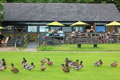 Outdoor restaurant with ducks. Stock Images