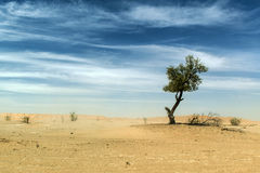 Outdoor sand tree standing dune oman sky old desert rub al khali Stock Image