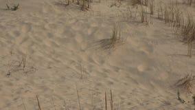 Barren desert sand dune. An outdoor scene in nature stock footage