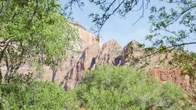 Outdoor scene of trees and mountains in Zion national park Utah royalty free stock photos