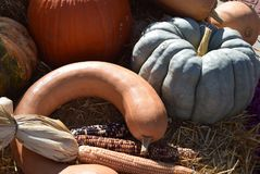Fall seasonal decorations with pumpkins and gourds. Stock Image