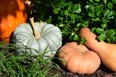 Fall seasonal decorations with pumpkins and gourds. Stock Photo