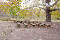Outdoor seating. Benches under big tree in the park during fall season Stock Photos