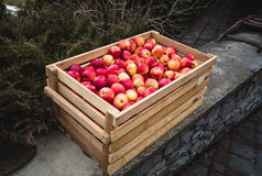 Outdoor shot of wooden box full of red apples Royalty Free Stock Image