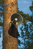Outdoor speaker. Hanging on the tree Royalty Free Stock Photos