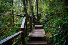 Outdoor Stair Master. Schooner Cove Trail, Tofino, Ucluelet, British Columbia Royalty Free Stock Photo