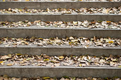 Outdoor stairs with lots of leaves Royalty Free Stock Images