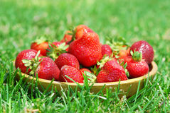 Outdoor Strawberries Royalty Free Stock Photo