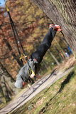 Outdoor suspension training in forest. Caucasian man at tree stock images